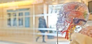 potentialul-din-noi-si-secretele-descifrate-despre-creierului-uman